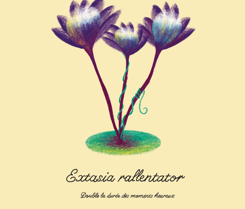 """Laura Daniel : """"La nature est si étonnante que je suis presque certaine que mes plantes sont susceptibles d'exister quelque part"""""""