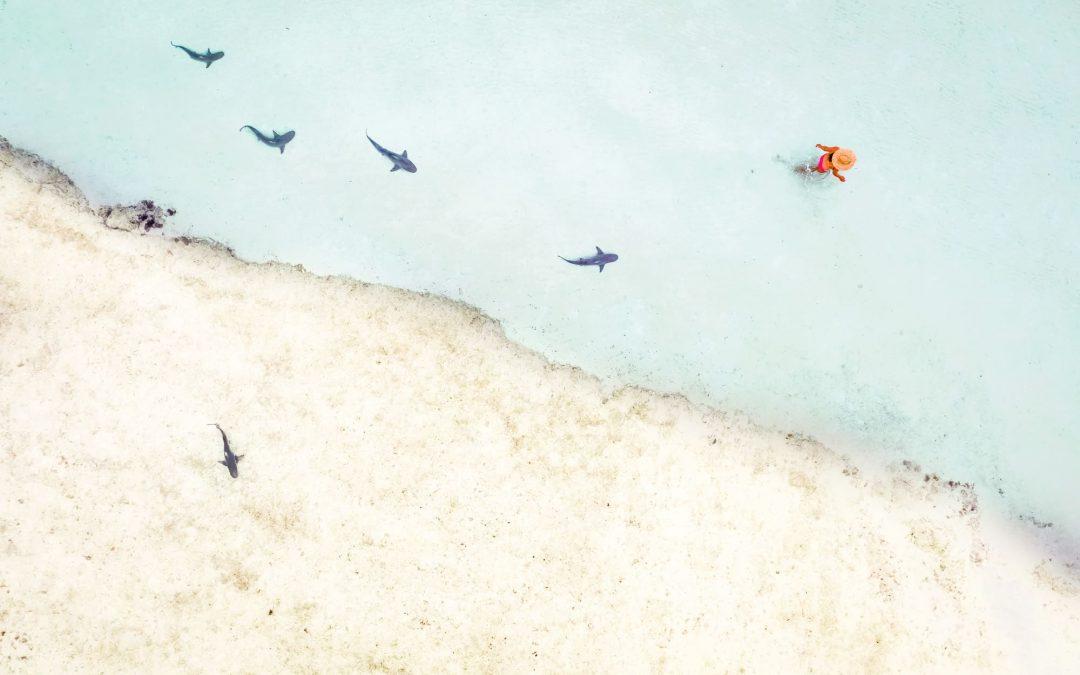 Isabelle Fabre : Partir… recommencer sa vie et tomber sur un requin blanc